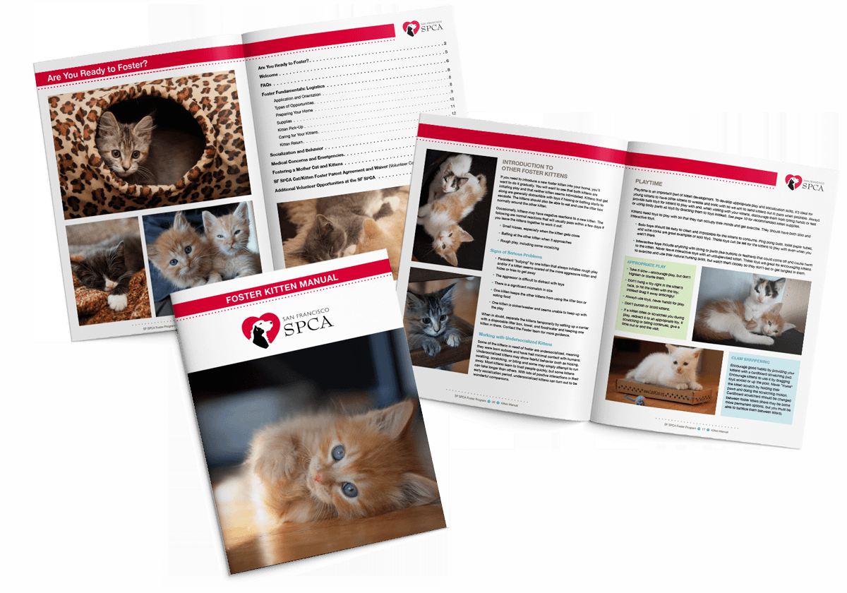 San Francisco SPCA foster kitten manual design