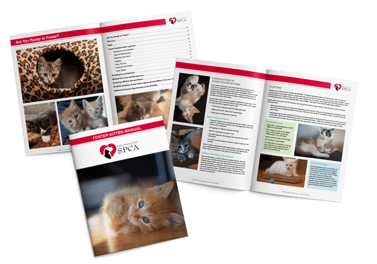 Pages from San Francisco SPCA Kitten Manual